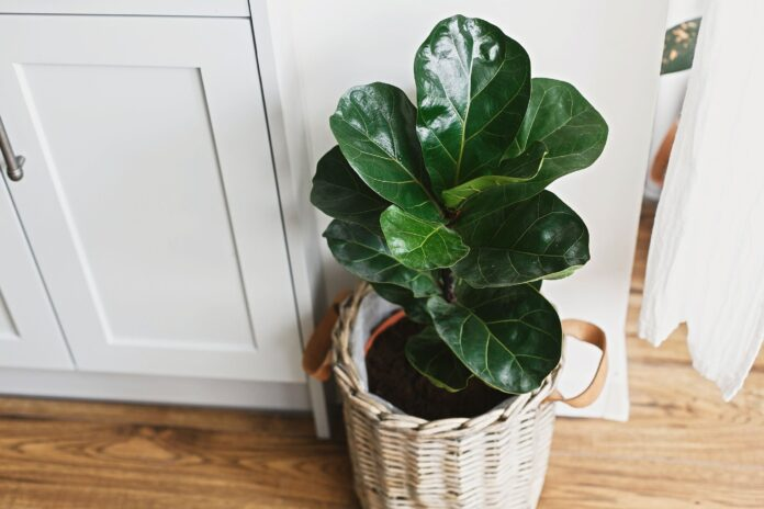 Indoor Plants that Improve overall Health and Wellness